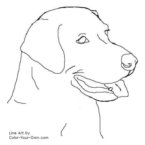 Dog Labrador Retriever Headstudy Coloring Page