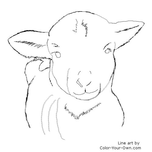Line Art By Color Your Own : Farm animals lamb coloring page