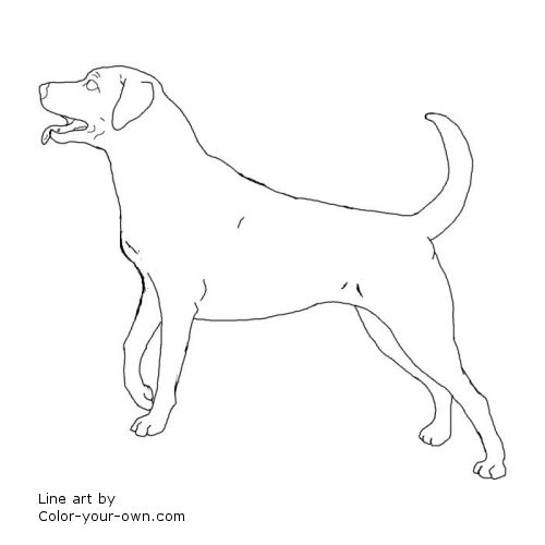lab puppies coloring pages - photo#19