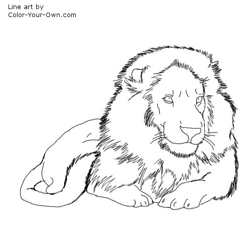 lion growling coloring pages - photo#18
