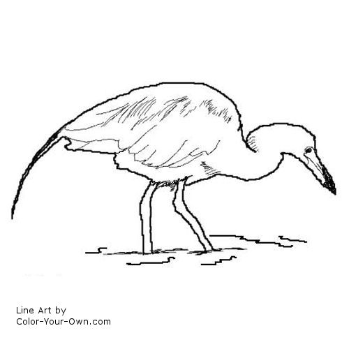 blue heron coloring pages - photo#18