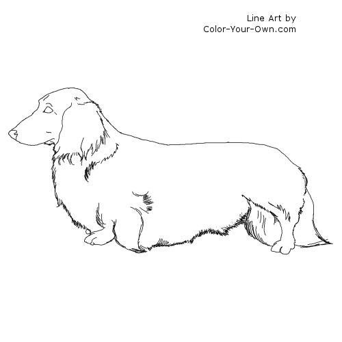Dachshund Coloring Pages Longhaired Dachshund Dog Coloring Page