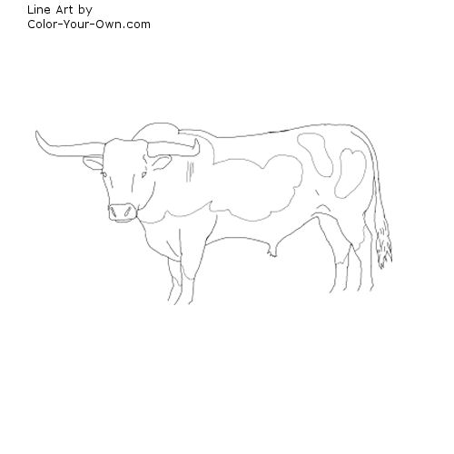 Line Art By Color Your Own : Longhorn bull coloring page