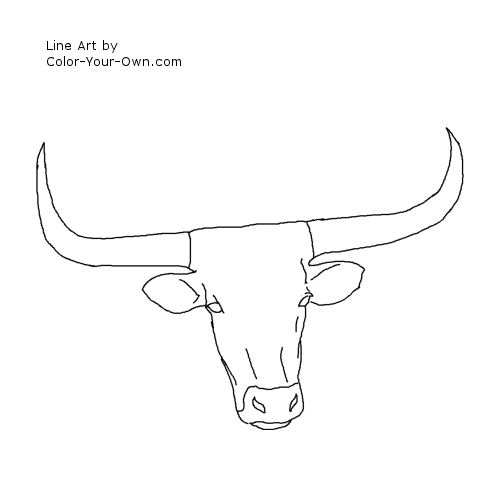 Longhorn Cattle Headstudy Line Art