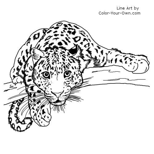 Awesome Color Your Own