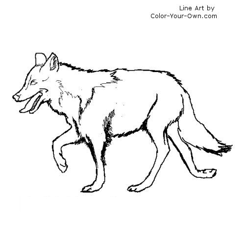 gray wolf coloring pages - photo#31