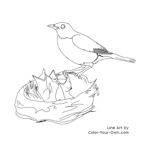 free wild birds coloring pages - photo#2