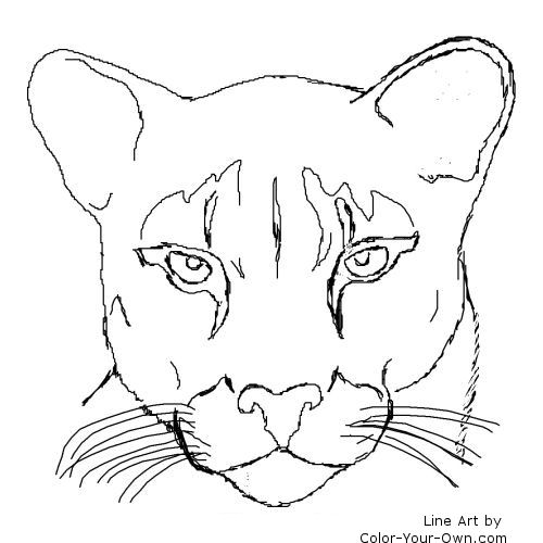 coloring pages mountain lion - photo #10
