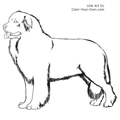 newfoundland coloring pages - photo#8