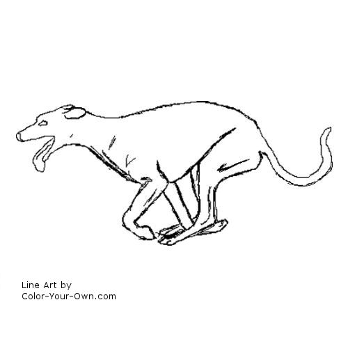 Dog Greyhound running coloring page