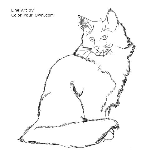 Norweigan Forest Cat Line Art