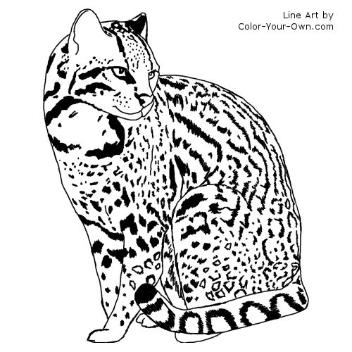 Ocelot Coloring Page