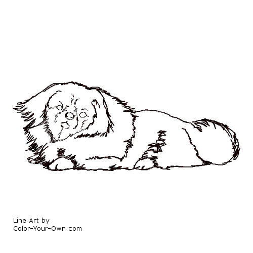 Line Art By Color Your Own : Pekinese dog coloring page