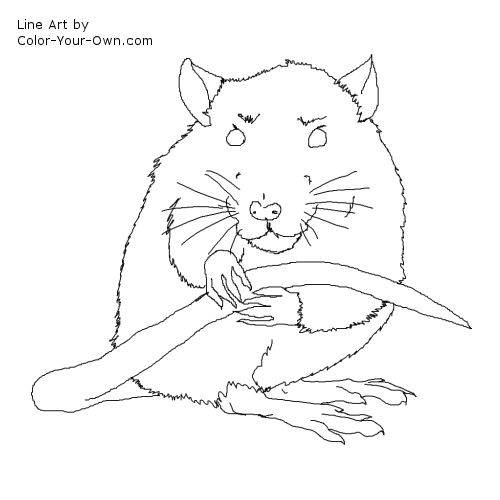 Pet Rat Coloring Page