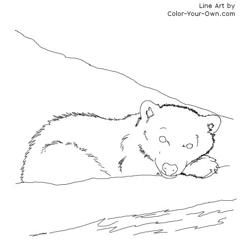 Line Art By Color Your Own : Arctic polar bear cub coloring page