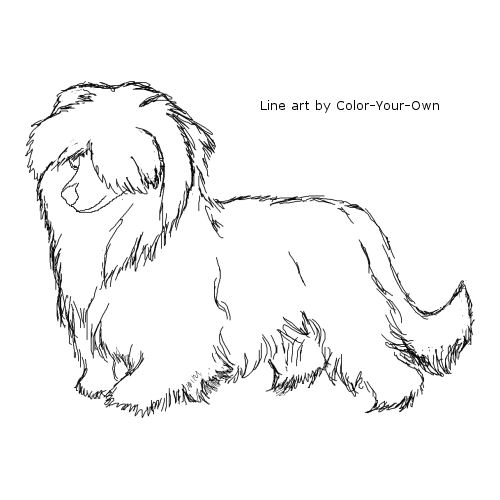 Powderpuff Chinese Crested Dog Line Art