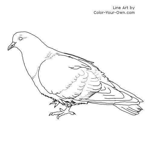 bird pigeon coloring page rock