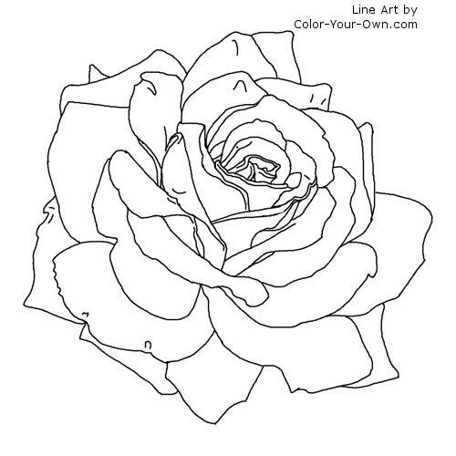 Line Drawing Rose Flower : Rose flower coloring page