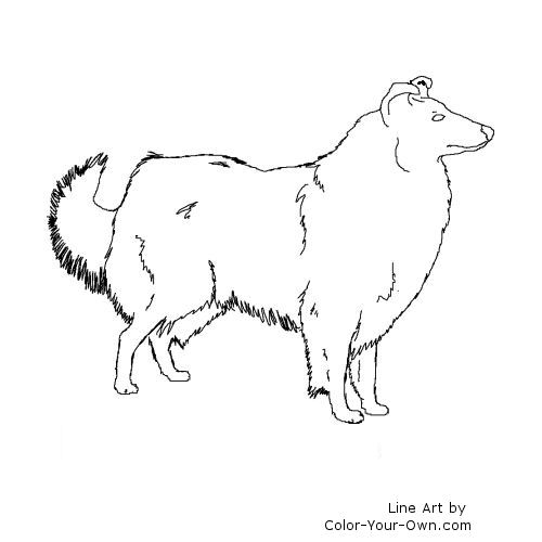 Rough Collie Line Art