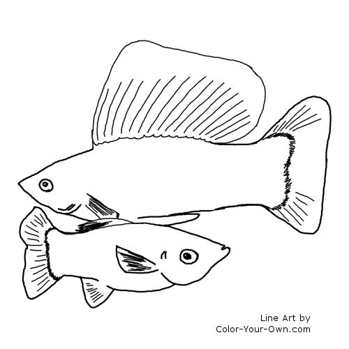 aquarium fish sailfin mollies coloring page