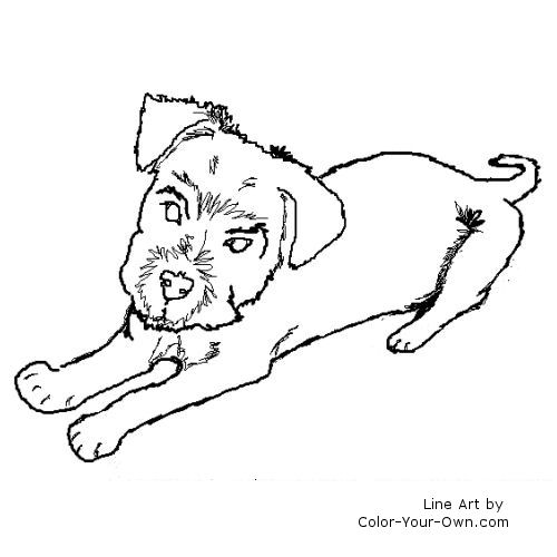 Line Art By Color Your Own : Schnauzer terrier puppy coloring page
