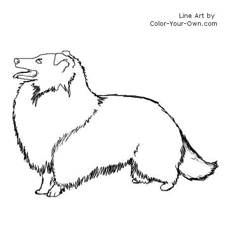 sheep dog coloring pages - photo#8