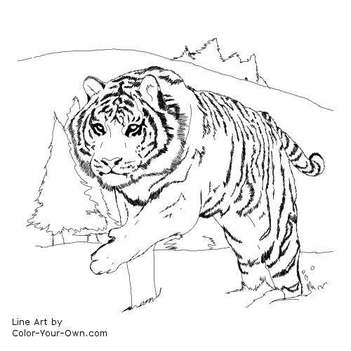 Line Art By Color Your Own : Siberian tiger coloring page