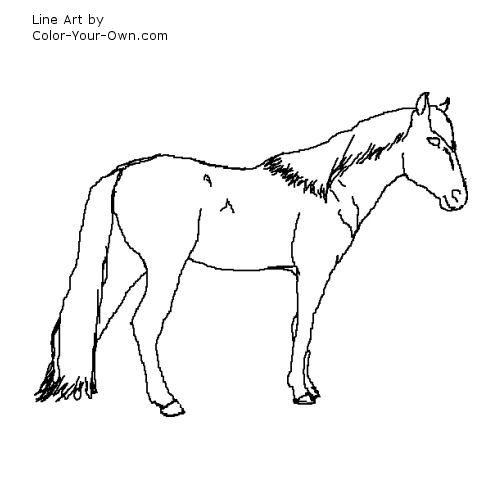 Line Art By Color Your Own : Spanish barb horse coloring page