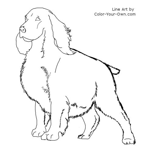 springer spaniel coloring pages - photo#4