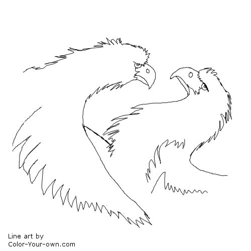 Eagle Wild Bird Line Art
