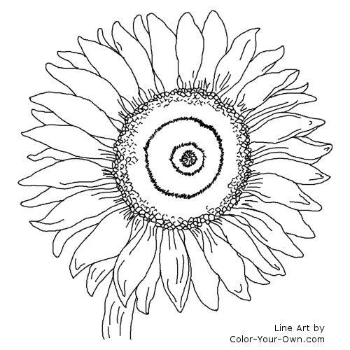 Sunflower Line Art