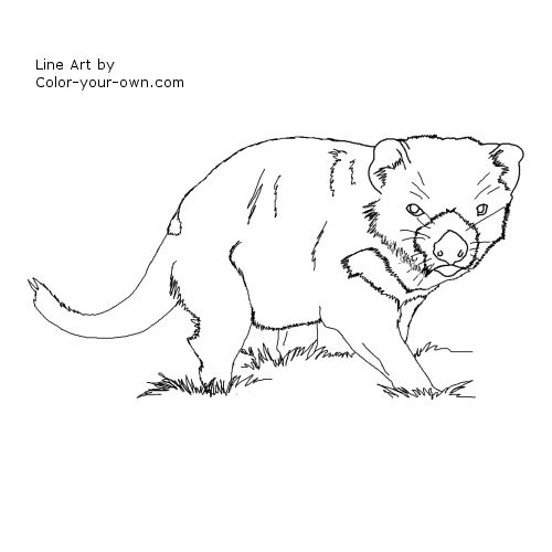 Tasmanian Devil Coloring Pages http://color-your-own.com/wildlife_tasmanian_devil.html