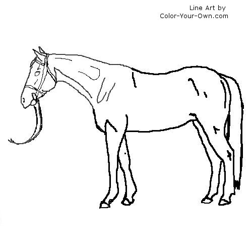 thoroughbred coloring pages - photo#5