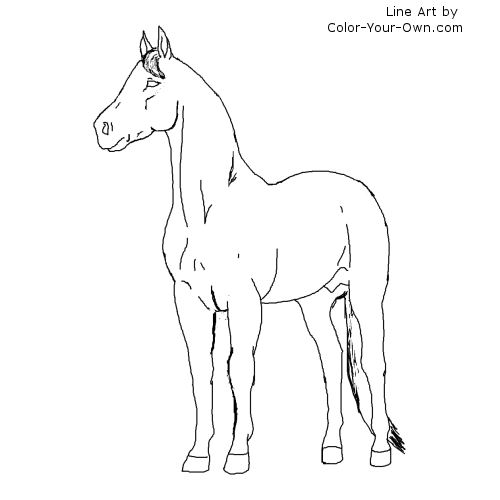 thoroughbred coloring pages - photo#7