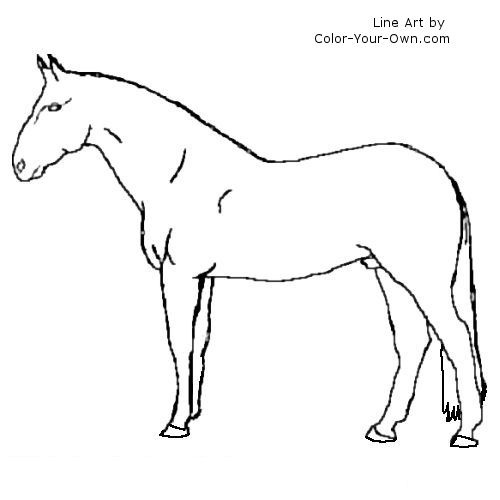 Warmblood horse stallion line art