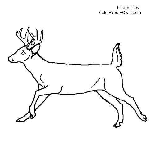 Whitetail Buck Coloring Page