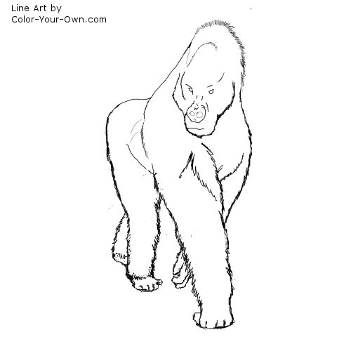 male gorilla line art