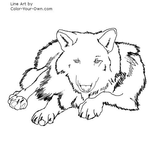 Line Art By Color Your Own : Tiger laying down drawing related keywords