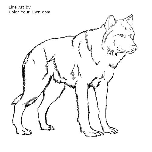 Free Anime Wolf Color Coloring Pages Wolves Colouring Pages
