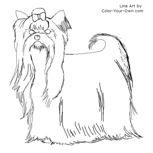 Line Drawing Yorkie : Yorkshire terrier coloring page