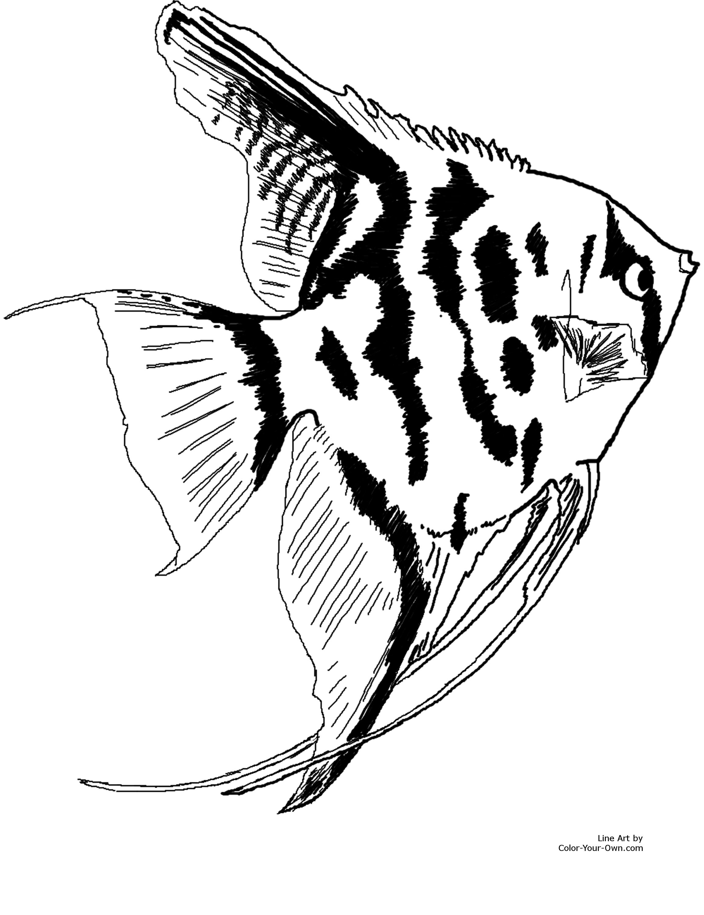 Angel Fish Outline