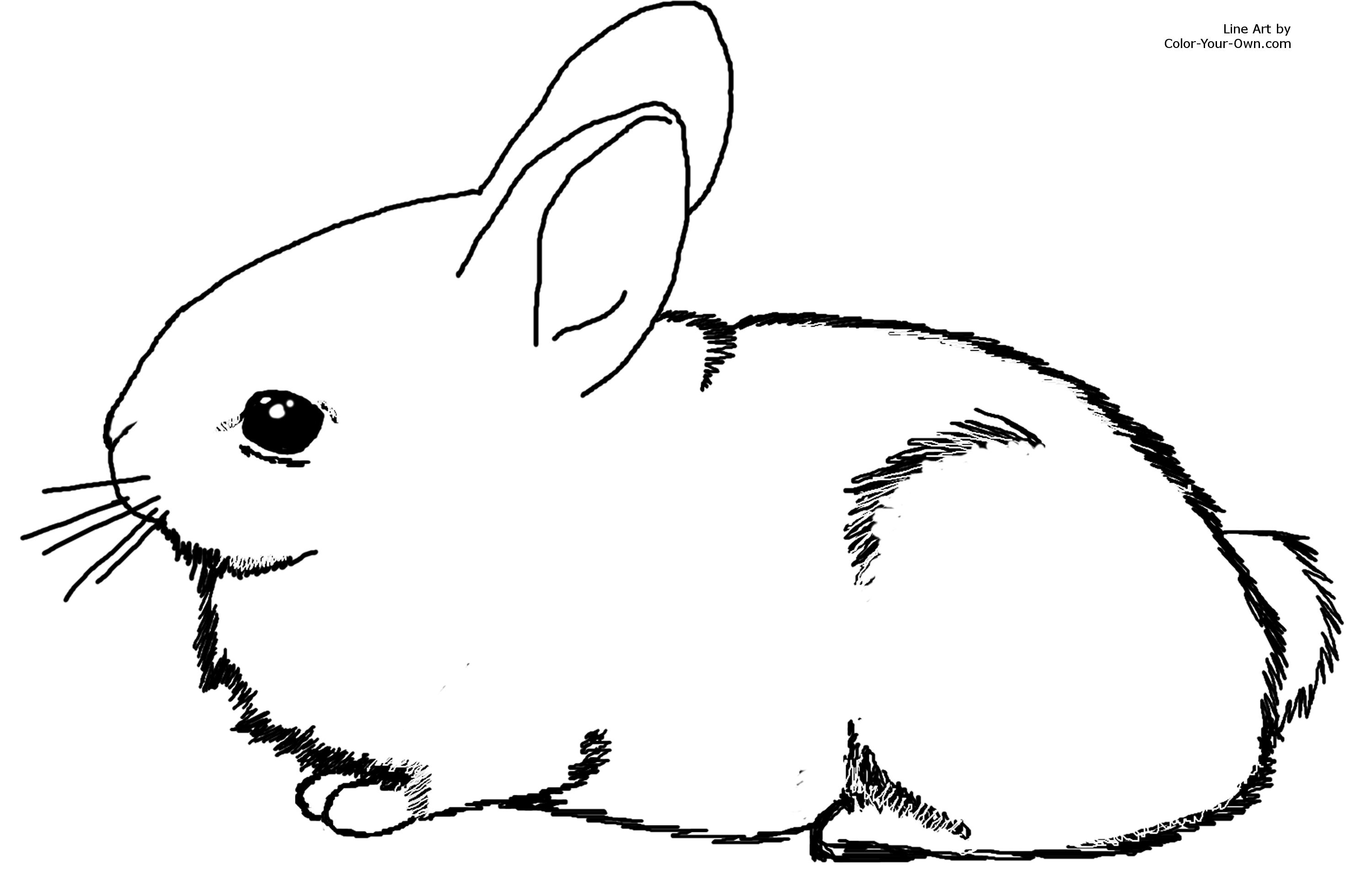 printable size click here return to the coloring pages index - Rabbit Coloring Page