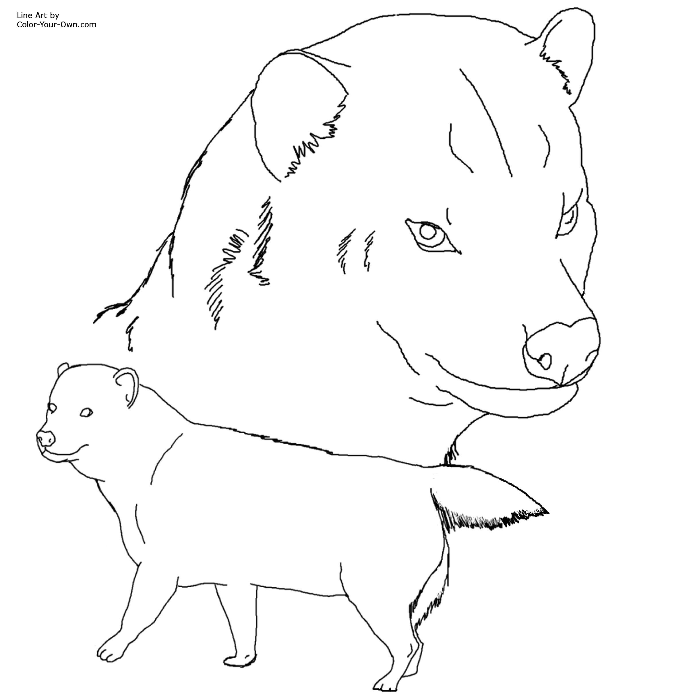 ... Coloring Page Labrador Retriever Outline Sketch Just Free Image