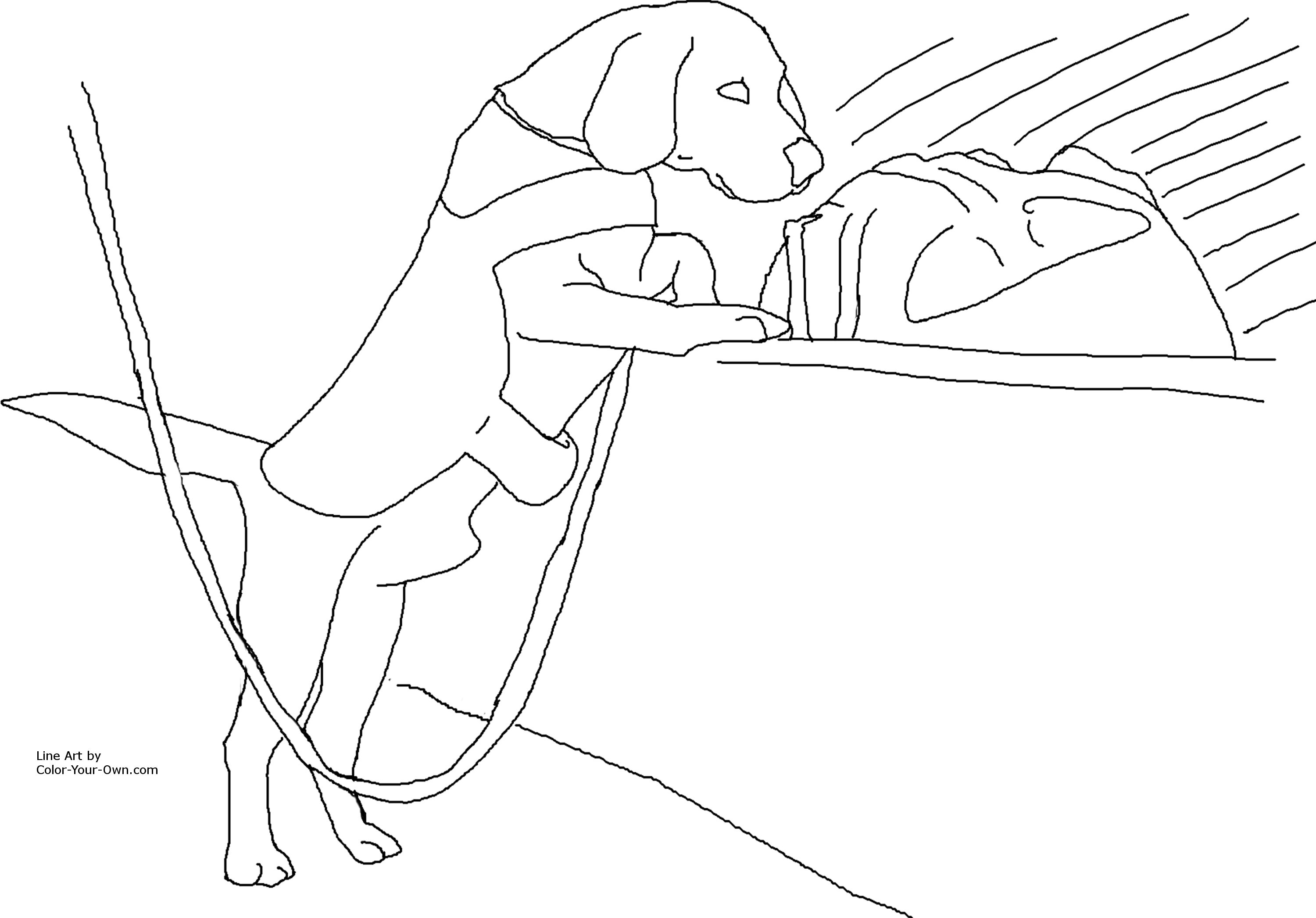 drug detection service dog coloring page
