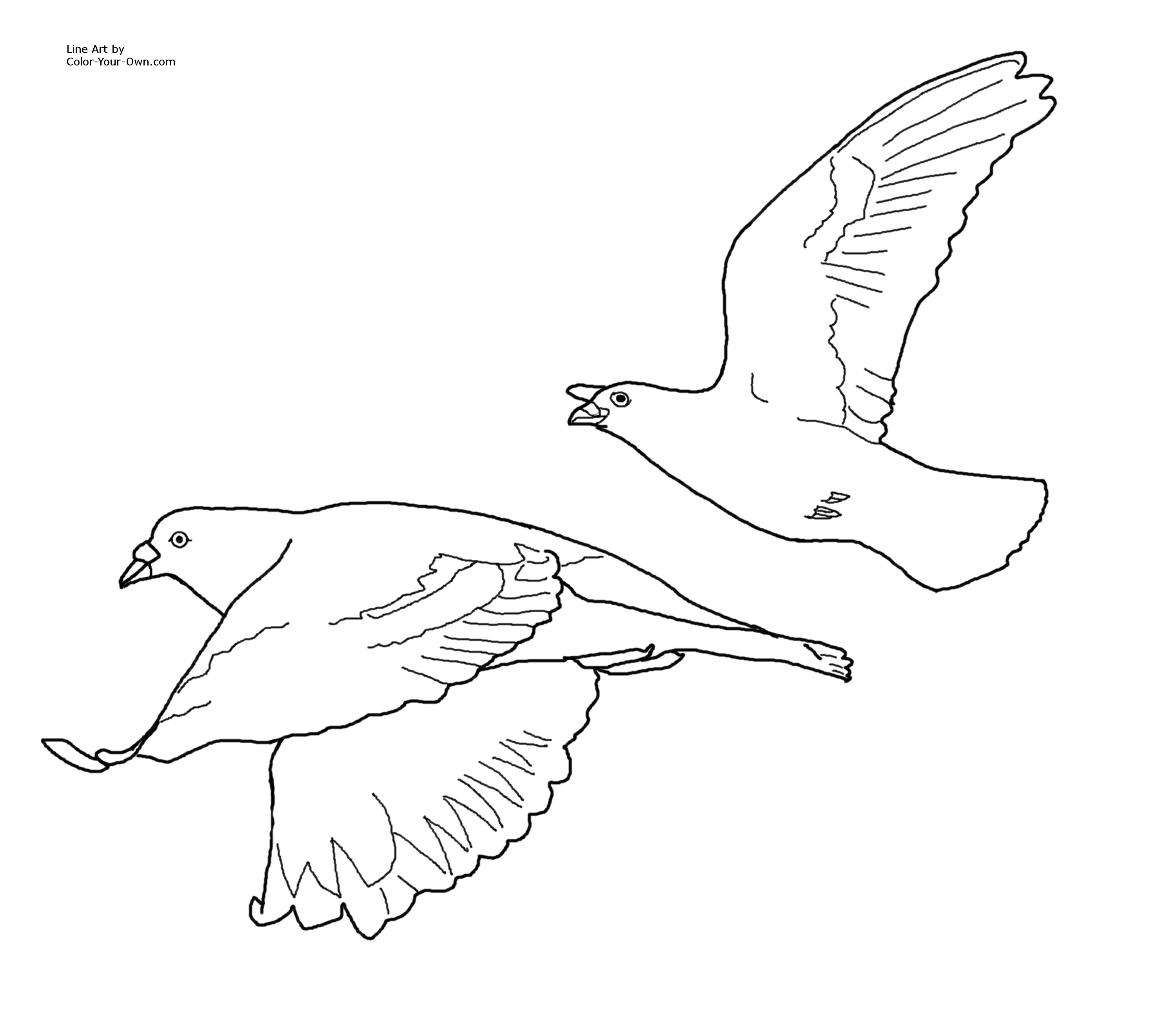 flying pigeons coloring page
