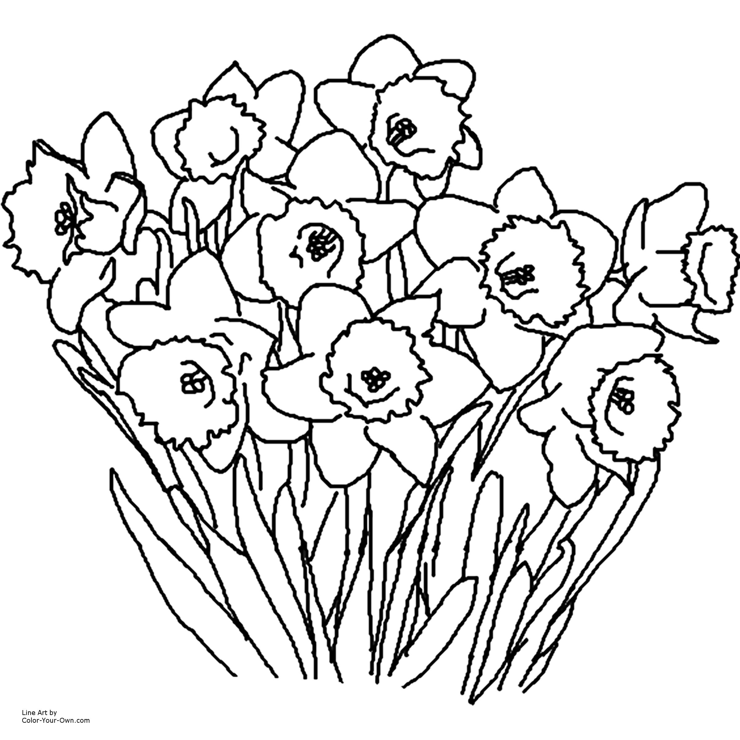 Spring Flowers Coloring Pages Daffodil Spring Flower Coloring Page