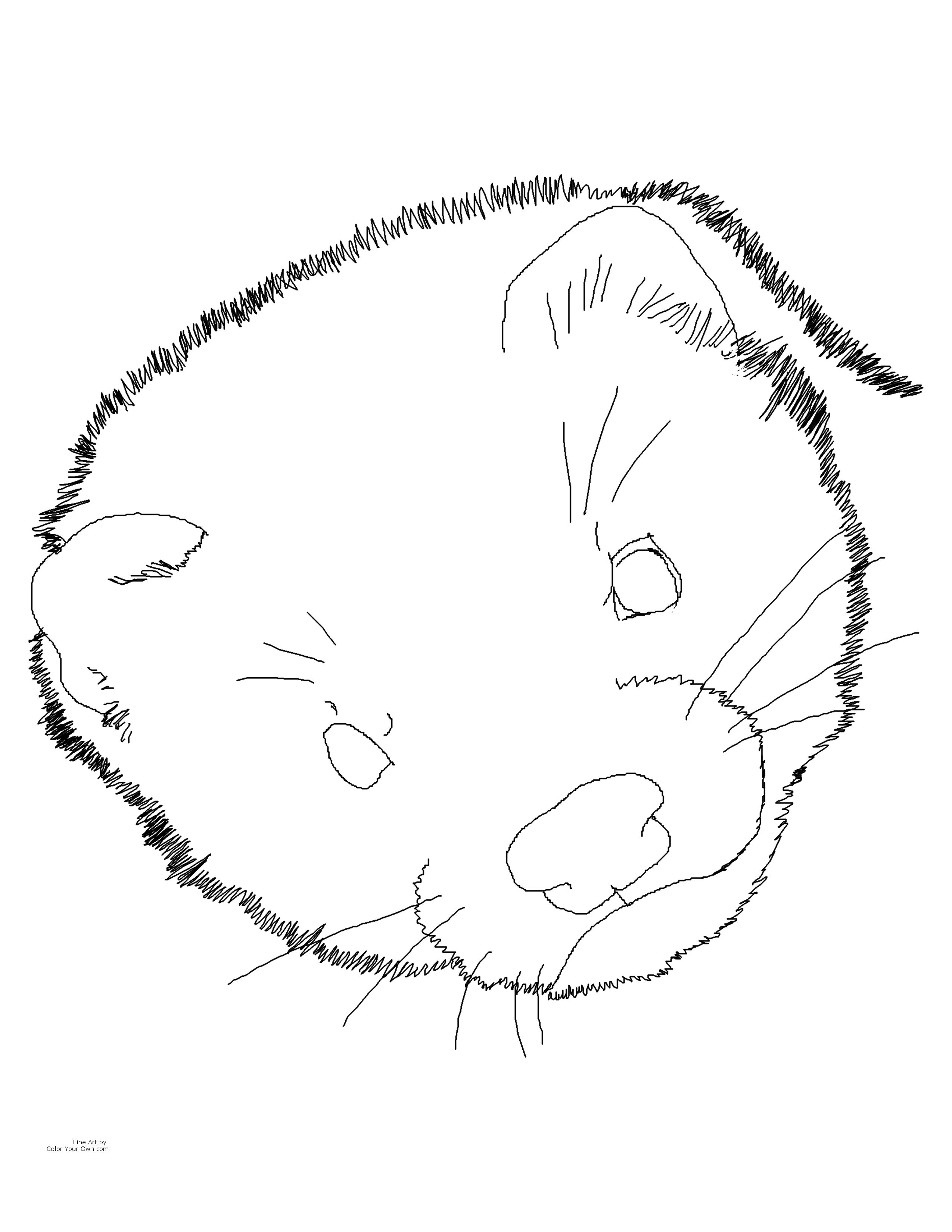 Ferret Coloring Pages To Print - Food Ideas