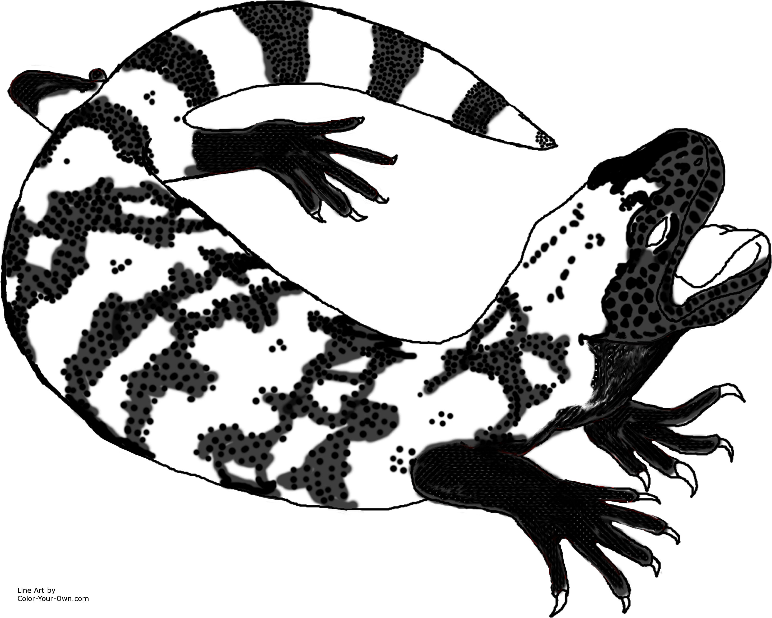 desert grassland whiptail lizard line art gila monster line art
