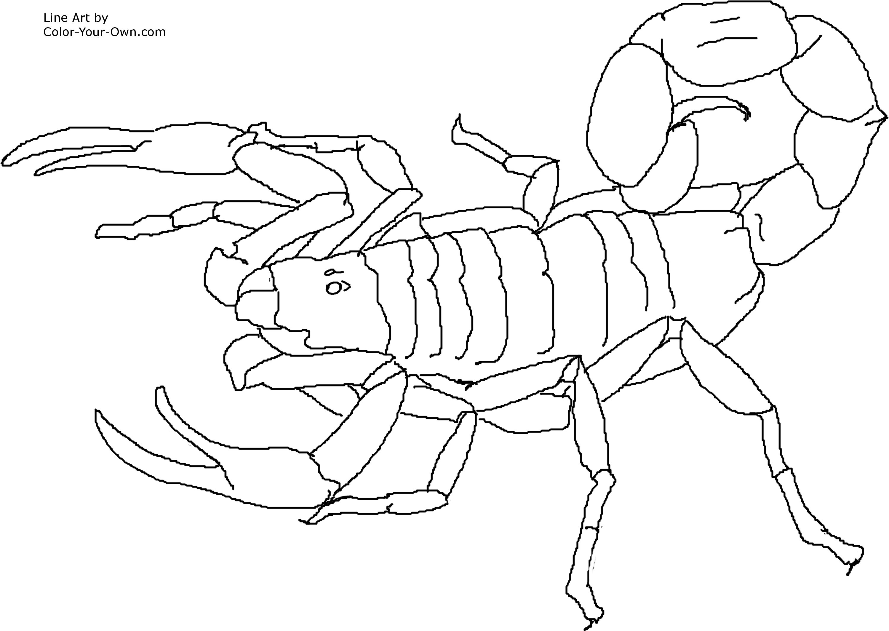 escorpion dibujo: