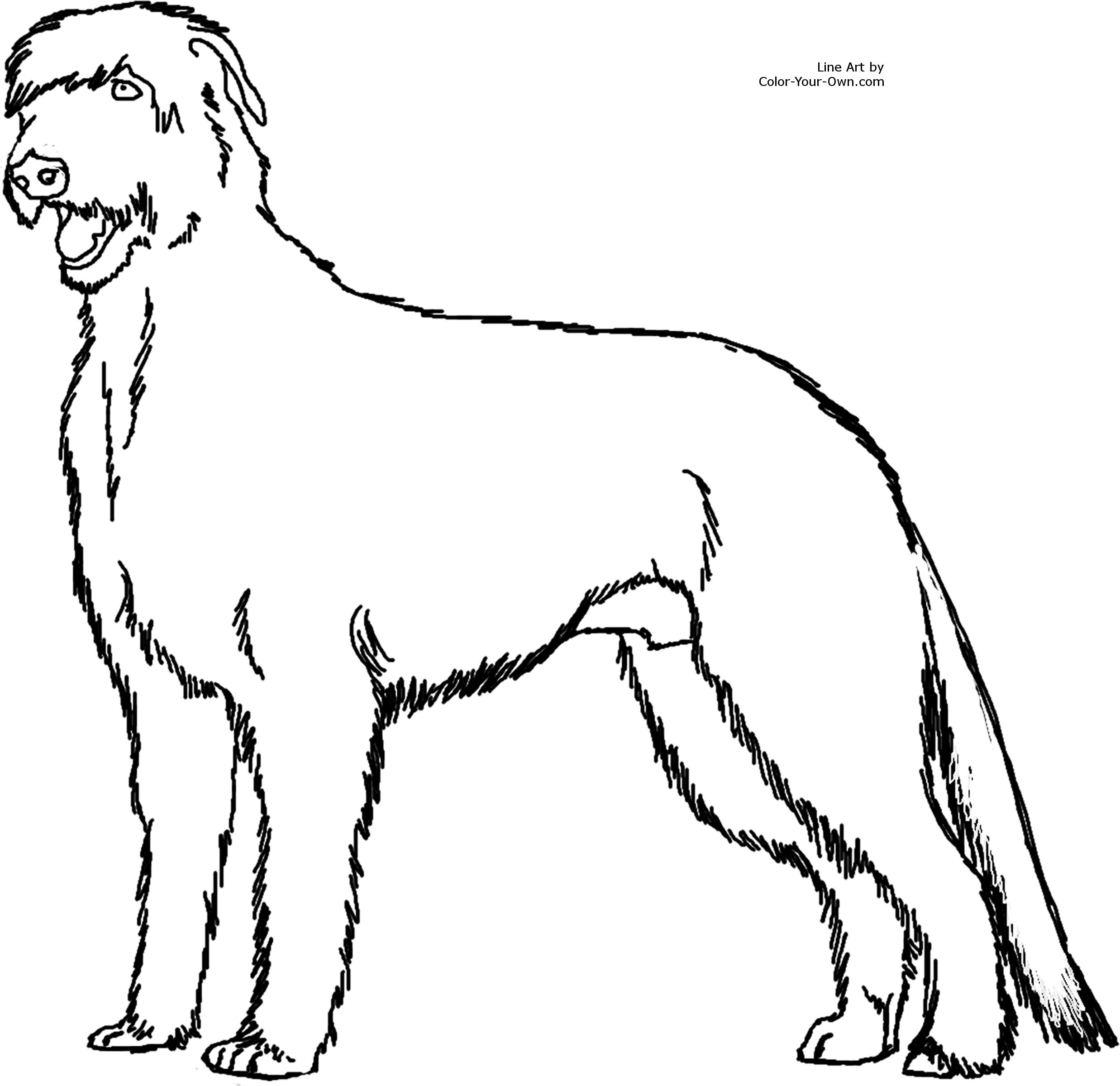 Miniature bucking bull coloring page - Index Of Printable Coloring Pages